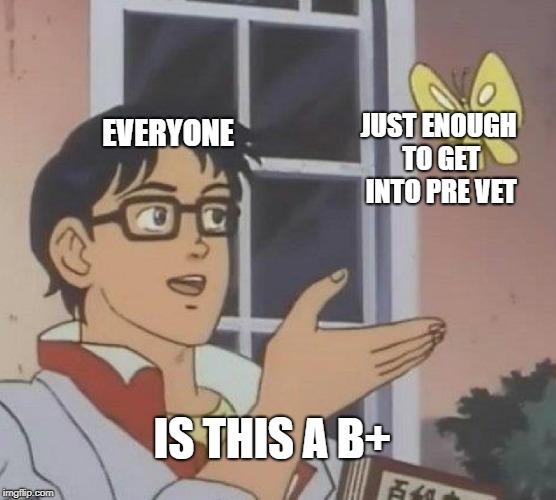 Is This A Pigeon Meme | EVERYONE JUST ENOUGH TO GET INTO PRE VET IS THIS A B+ | image tagged in is this a pigeon | made w/ Imgflip meme maker