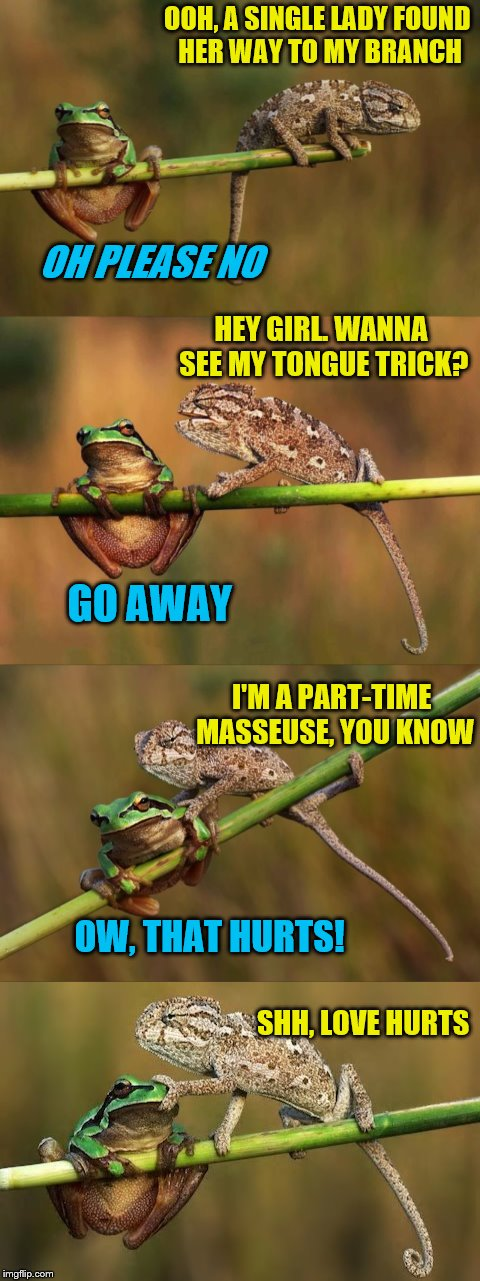 Love hurts, but not like this. ~ DashHopes template (Frog Week June 4-10, a JBmemegeek & giveuahint event!) | OOH, A SINGLE LADY FOUND HER WAY TO MY BRANCH OH PLEASE NO HEY GIRL. WANNA SEE MY TONGUE TRICK? GO AWAY I'M A PART-TIME MASSEUSE, YOU KNOW O | image tagged in memes,frog week,love hurts,jbmemegeek,giveuahint,dashhopes | made w/ Imgflip meme maker
