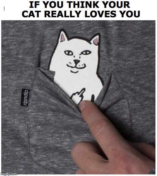 Feline Love | IF YOU THINK YOUR CAT REALLY LOVES YOU | image tagged in cat,middle finger,i love cats,feline | made w/ Imgflip meme maker