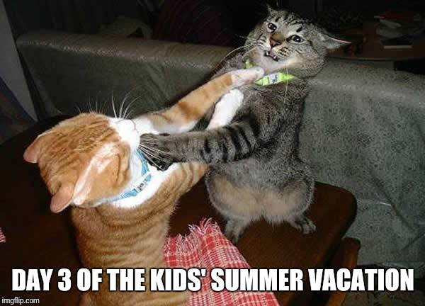 Is it September yet? | DAY 3 OF THE KIDS' SUMMER VACATION | image tagged in two cats fighting for real | made w/ Imgflip meme maker