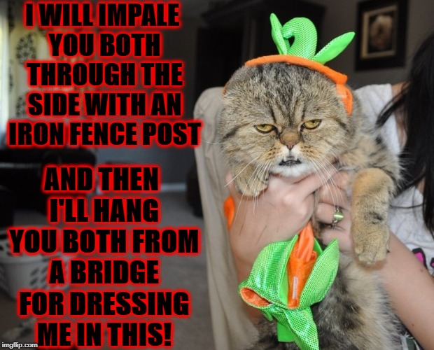 I WILL IMPALE YOU BOTH THROUGH THE SIDE WITH AN IRON FENCE POST AND THEN I'LL HANG YOU BOTH FROM A BRIDGE FOR DRESSING ME IN THIS! | image tagged in screw you human | made w/ Imgflip meme maker