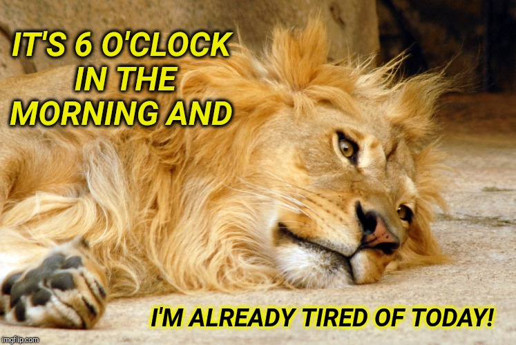 I'm Tired | IT'S 6 O'CLOCK IN THE MORNING AND I'M ALREADY TIRED OF TODAY! | image tagged in funny memes,exhausted,work,tired cat,sick  tired,fed up | made w/ Imgflip meme maker