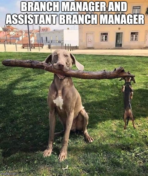 Branch manager | BRANCH MANAGER AND ASSISTANT BRANCH MANAGER | image tagged in funny dog,branch manager,funny fetch stick | made w/ Imgflip meme maker