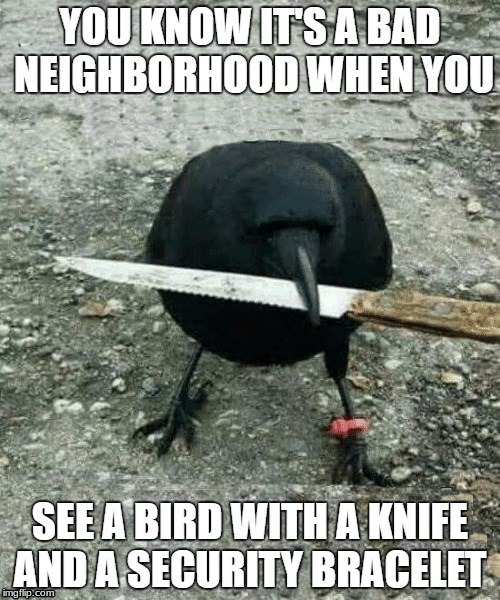 Killer Bird | image tagged in bird,knife | made w/ Imgflip meme maker