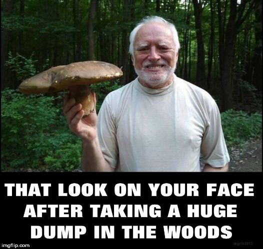 image tagged in hide the pain harold,harold,dump,crap,shit,woods | made w/ Imgflip meme maker
