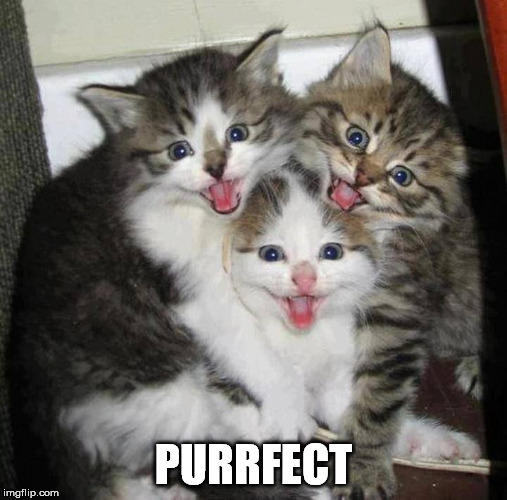 PURRFECT | made w/ Imgflip meme maker