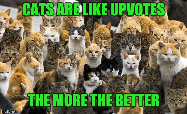 Aoshima cat island | CATS ARE LIKE UPVOTES THE MORE THE BETTER | image tagged in aoshima cat island | made w/ Imgflip meme maker