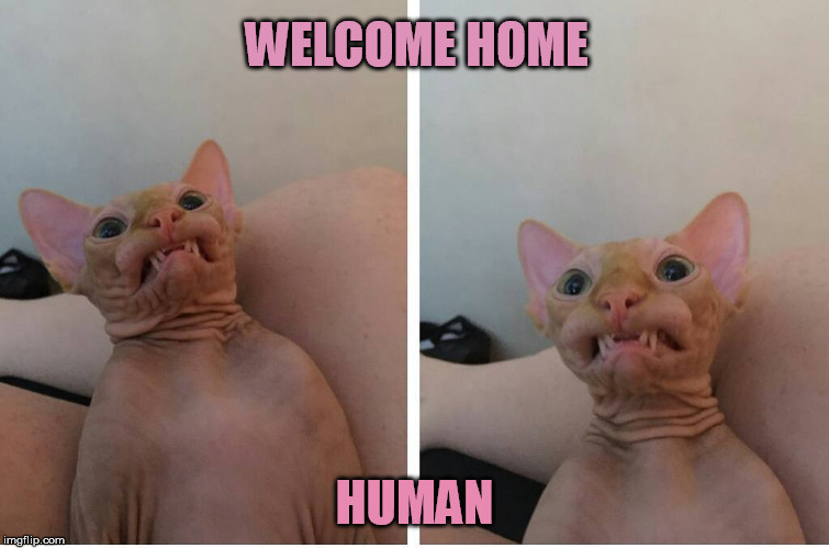 WELCOME HOME HUMAN | made w/ Imgflip meme maker