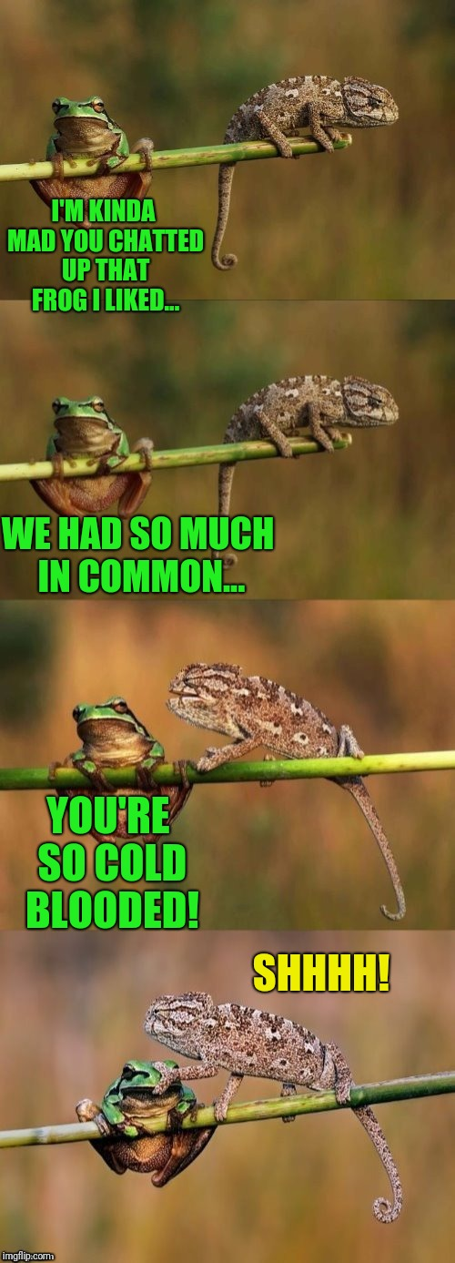 Dashopes Shhhh | I'M KINDA MAD YOU CHATTED UP THAT FROG I LIKED... SHHHH! WE HAD SO MUCH IN COMMON... YOU'RE SO COLD BLOODED! | image tagged in frog | made w/ Imgflip meme maker