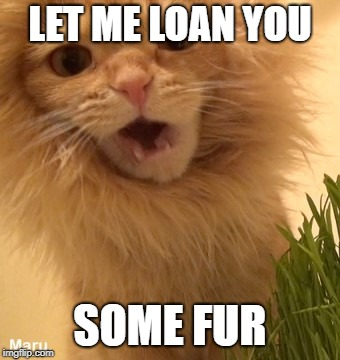 LET ME LOAN YOU SOME FUR | made w/ Imgflip meme maker