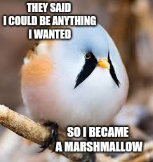 Toasted to Perfection | THEY SAID I COULD BE ANYTHING I WANTED SO I BECAME A MARSHMALLOW | image tagged in these,tags,say,something,i know right,its crazy | made w/ Imgflip meme maker