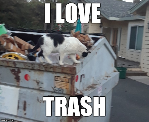 Dumpster Cat | I LOVE TRASH | image tagged in grumpy cat | made w/ Imgflip meme maker