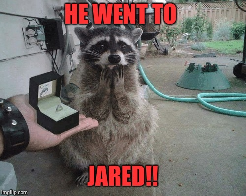 Surprise | HE WENT TO JARED!! | image tagged in memes,funny,dank,raccoon,jared,proposal | made w/ Imgflip meme maker