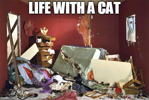 life with a cat | LIFE WITH A CAT | image tagged in cat,mess | made w/ Imgflip meme maker