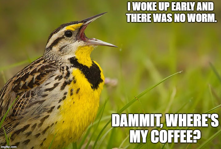 I WOKE UP EARLY AND THERE WAS NO WORM. DAMMIT, WHERE'S MY COFFEE? | image tagged in bird | made w/ Imgflip meme maker