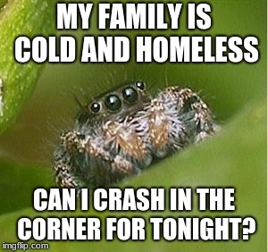 Misunderstood Spider | MY FAMILY IS COLD AND HOMELESS CAN I CRASH IN THE CORNER FOR TONIGHT? | image tagged in misunderstood spider | made w/ Imgflip meme maker