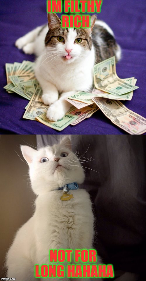 rich cat  | IM FILTHY RICH NOT FOR LONG HAHAHA | image tagged in batman slapping robin | made w/ Imgflip meme maker