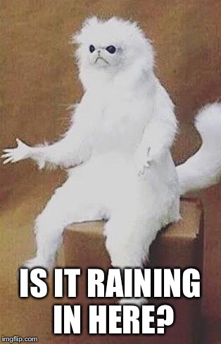 IS IT RAINING IN HERE? | image tagged in confused white monkey,memes,rain | made w/ Imgflip meme maker