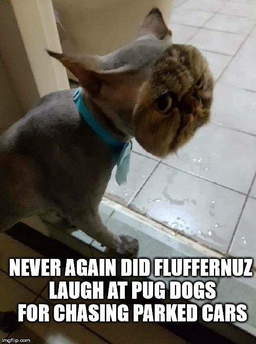 This is a symptom of Tom & Jerry syndrome where the cat chases the mouse into its hole but doesn't stop in time |  NEVER AGAIN DID FLUFFERNUZ LAUGH AT PUG DOGS FOR CHASING PARKED CARS | image tagged in cat,pugs,tom  jerry | made w/ Imgflip meme maker