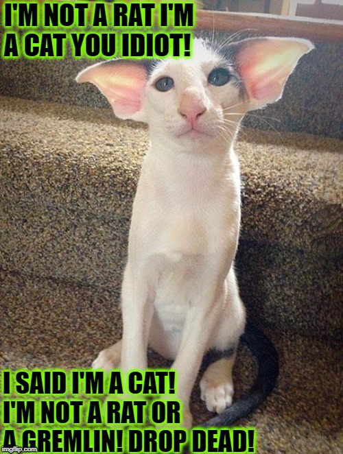 I'M NOT A RAT I'M A CAT YOU IDIOT! I SAID I'M A CAT! I'M NOT A RAT OR A GREMLIN! DROP DEAD! | image tagged in what is it | made w/ Imgflip meme maker
