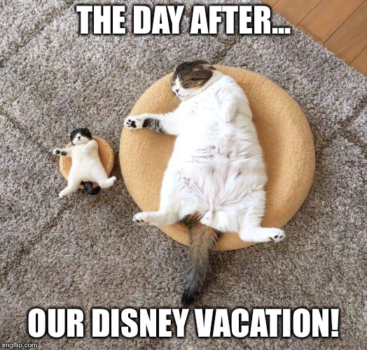 Napping kitty's  | THE DAY AFTER... OUR DISNEY VACATION! | image tagged in cute cat,grumpy cat,dogs an cats,waltdisney,disney world,walt disney | made w/ Imgflip meme maker