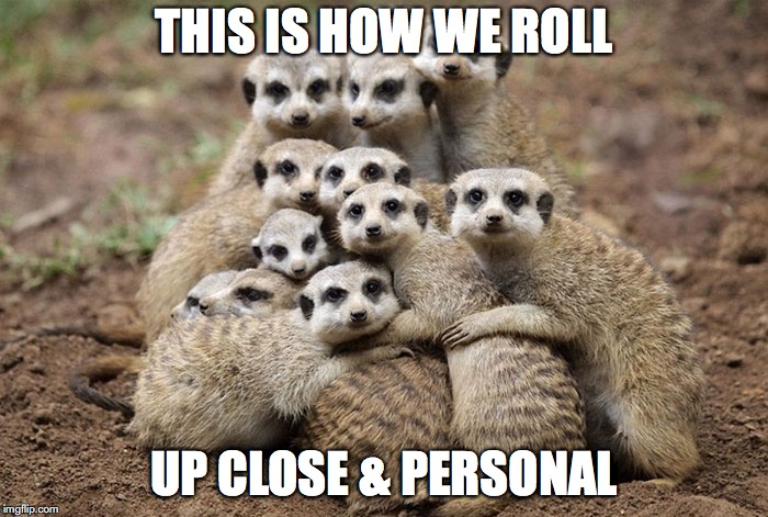 Animals Hugging | THIS IS HOW WE ROLL UP CLOSE & PERSONAL | image tagged in animals hugging | made w/ Imgflip meme maker