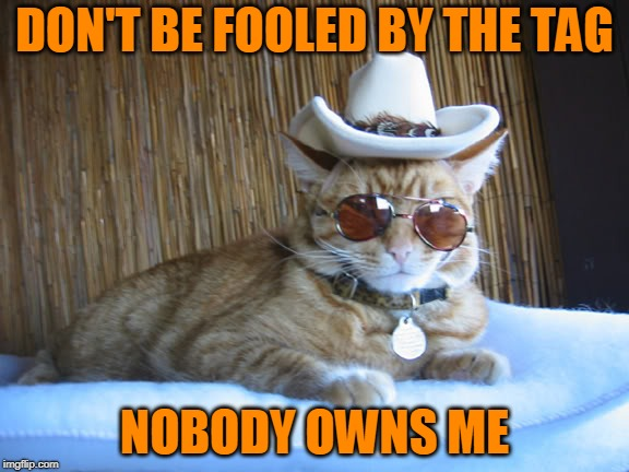 Independent Kitty | DON'T BE FOOLED BY THE TAG NOBODY OWNS ME | image tagged in cat | made w/ Imgflip meme maker