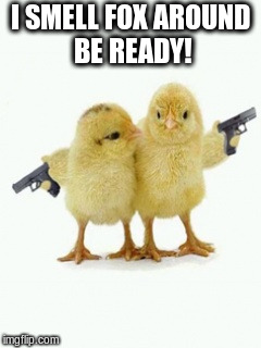 young chicks with guns | I SMELL FOX AROUND BE READY! | image tagged in guns,foxes,chicks | made w/ Imgflip meme maker