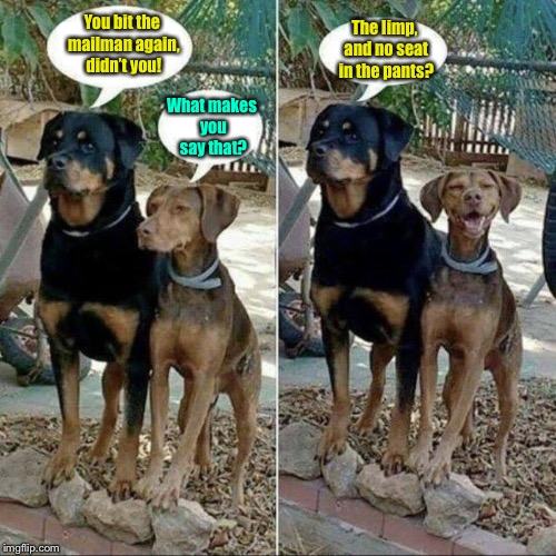 And their owner is a big Amazon shopper! | You bit the mailman again, didn't you! What makes you say that? The limp, and no seat in the pants? | image tagged in dogs,memes,funny memes,mailman,bite,pants | made w/ Imgflip meme maker