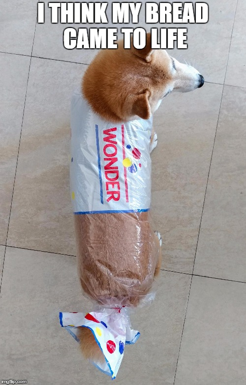 Bread Shibe |  I THINK MY BREAD CAME TO LIFE | image tagged in doge,bread | made w/ Imgflip meme maker