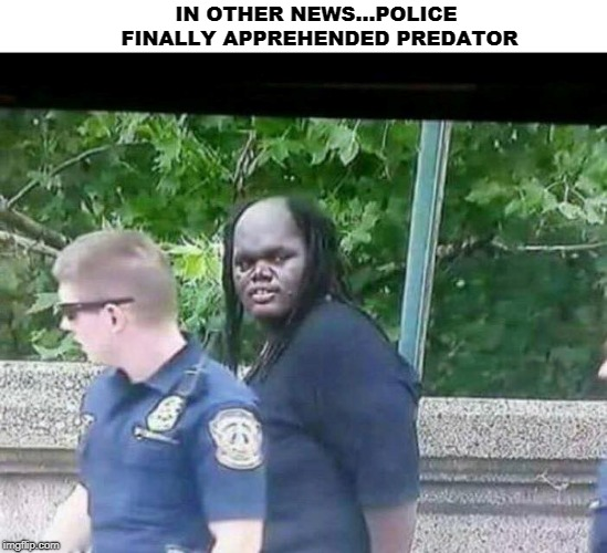It's only a matter of time before he activates his wrist detonator.  | IN OTHER NEWS...POLICE FINALLY APPREHENDED PREDATOR | image tagged in predator,predator-alien-guy,alien,memes,arrested,police | made w/ Imgflip meme maker