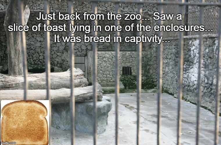 Bad pun... | Just back from the zoo... Saw a slice of toast lying in one of the enclosures...  It was bread in captivity... | image tagged in zoo,cage,bread,captivity | made w/ Imgflip meme maker