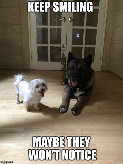 Trouble  | KEEP SMILING MAYBE THEY WON'T NOTICE | image tagged in trouble,dogs,big trouble | made w/ Imgflip meme maker