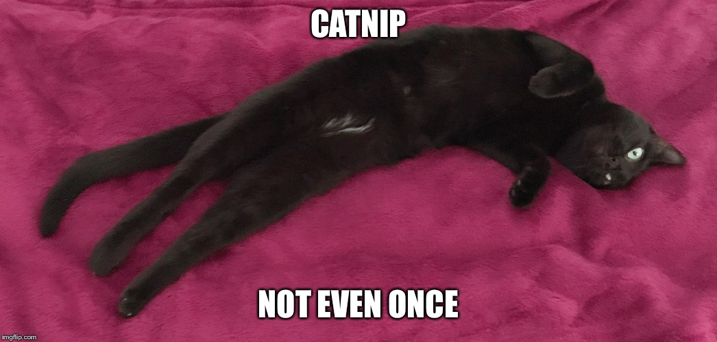 Catnip | CATNIP NOT EVEN ONCE | image tagged in catnip,not even once,cats | made w/ Imgflip meme maker