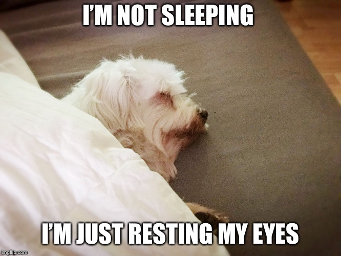 I'M NOT SLEEPING I'M JUST RESTING MY EYES | image tagged in napping | made w/ Imgflip meme maker