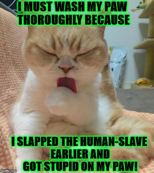 I MUST WASH MY PAW THOROUGHLY BECAUSE I SLAPPED THE HUMAN-SLAVE EARLIER AND GOT STUPID ON MY PAW! | image tagged in human slave killer | made w/ Imgflip meme maker