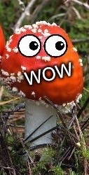 WoW Face Shroom | . | image tagged in wow face shroom | made w/ Imgflip meme maker