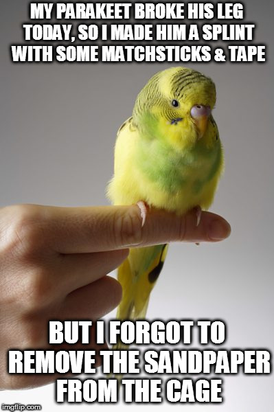 SICK PARAKEET | MY PARAKEET BROKE HIS LEG TODAY, SO I MADE HIM A SPLINT WITH SOME MATCHSTICKS & TAPE BUT I FORGOT TO REMOVE THE SANDPAPER FROM THE CAGE | image tagged in sick parakeet,parakeet,budgie,bird,angry bird | made w/ Imgflip meme maker