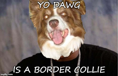 Yo Dawg Heard You Meme | YO DAWG IS A BORDER COLLIE | image tagged in memes,yo dawg heard you,chili the border collie,border collie,dogs | made w/ Imgflip meme maker