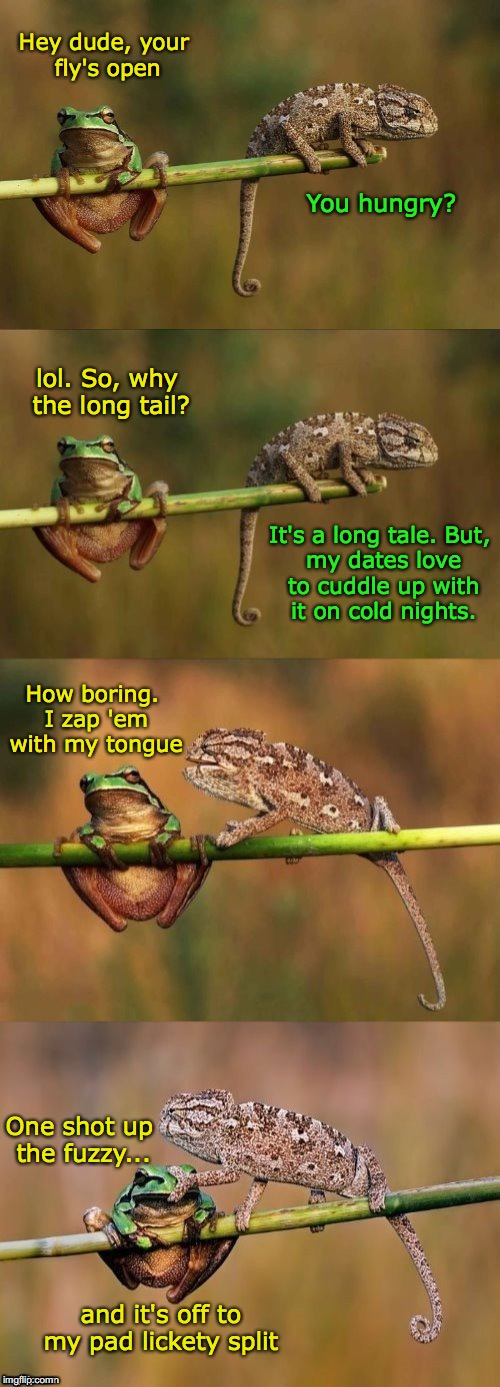 FROG WEEK. FROG AND CHAMELEON | Hey dude, your fly's open One shot up the fuzzy... It's a long tale.But, my dates love to cuddle up with it on cold nights. How boring. I z | image tagged in frog week,frog,dashhopes,chameleon | made w/ Imgflip meme maker