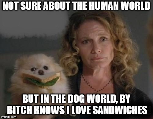 Dogs know | NOT SURE ABOUT THE HUMAN WORLD BUT IN THE DOG WORLD, BY B**CH KNOWS I LOVE SANDWICHES | image tagged in sandwich | made w/ Imgflip meme maker