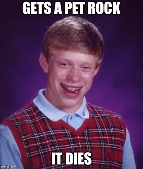 Bad Luck Brian Meme | GETS A PET ROCK IT DIES | image tagged in memes,bad luck brian | made w/ Imgflip meme maker