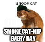 SNOOP CATT | SMOKE CAT-NIP EVERY DAY | image tagged in snoop catt | made w/ Imgflip meme maker
