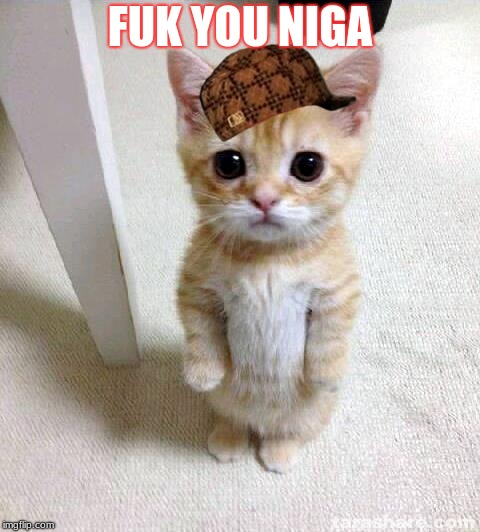 Cute Cat | FUK YOU NIGA | image tagged in memes,cute cat,scumbag | made w/ Imgflip meme maker