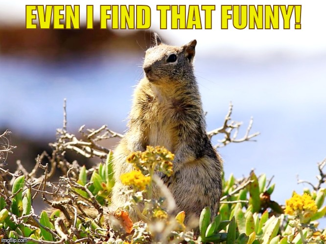 EVEN I FIND THAT FUNNY! | made w/ Imgflip meme maker