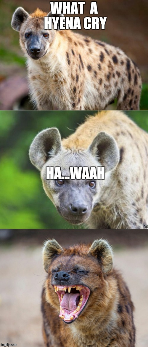 Give me 30 comments   (sorry for the  text)   | WHAT  A HYENA CRY HA...WAAH | image tagged in bad pun hyena,hyena,memes,funny | made w/ Imgflip meme maker