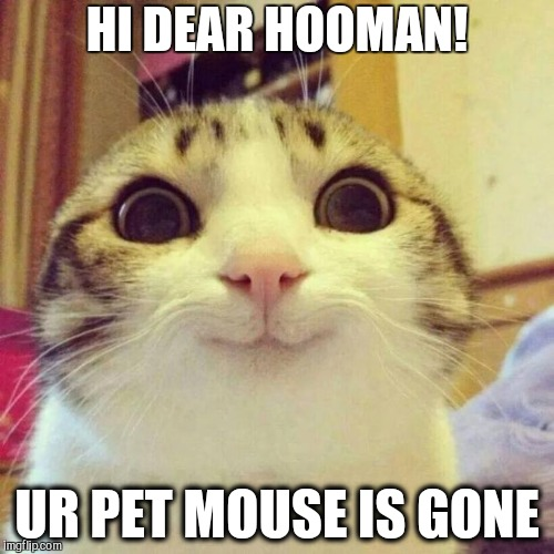 Smiling Cat Meme | HI DEAR HOOMAN! UR PET MOUSE IS GONE | image tagged in memes,smiling cat | made w/ Imgflip meme maker
