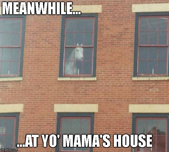 Yo Dawg, I hears Yo' Mama's Into Horses | MEANWHILE... ...AT YO' MAMA'S HOUSE | image tagged in horses,animals,creepy,mama jokes,meanwhile,window | made w/ Imgflip meme maker