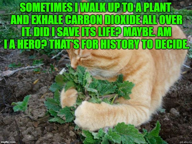 Plant lover | SOMETIMES I WALK UP TO A PLANT AND EXHALE CARBON DIOXIDE ALL OVER IT. DID I SAVE ITS LIFE? MAYBE. AM I A HERO? THAT'S FOR HISTORY TO DECIDE. | image tagged in plant lover,funny,memes,funny memes,hero,oxygen | made w/ Imgflip meme maker