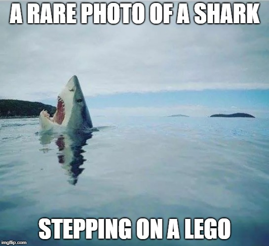 (In Awe)...So Majestic  | A RARE PHOTO OF A SHARK STEPPING ON A LEGO | image tagged in memes,shark_head_out_of_water,stepping on a lego | made w/ Imgflip meme maker